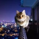 Как не потерять кота