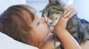 Зачем урчат кошки?