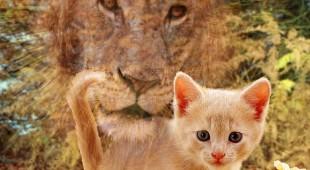 Иудейская легенда о появлении кошки