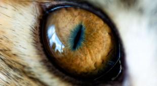 Кошачий глаз — настоящая галактика