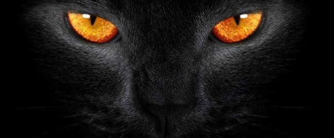 Примета о черной кошке
