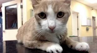 Собачья кровь спасла кошачью жизнь