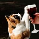 В Японии выпустили вино для кошек