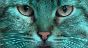 Тайна зеленой кошки