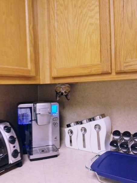 котик спрятался