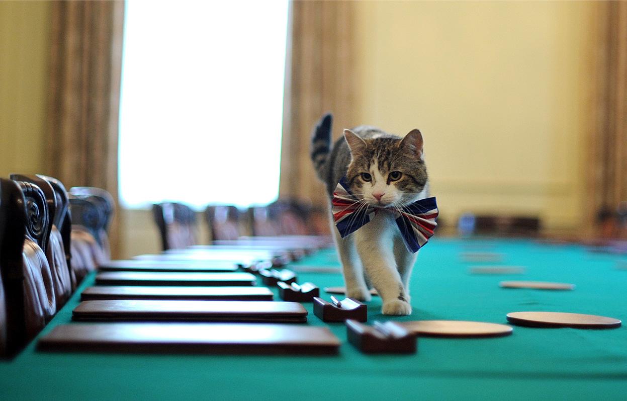 отучить кошку ходить по столам