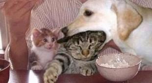 Как достать кота
