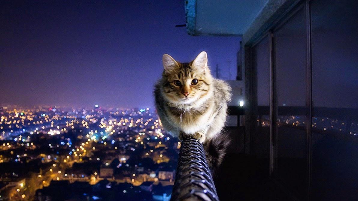 cat-balcony