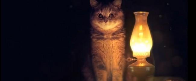 Волшебные коубы с кошками