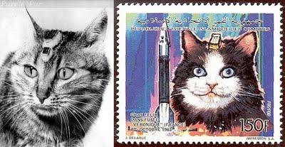 первая кошка в космосе