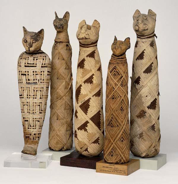 египетские мумии кошек