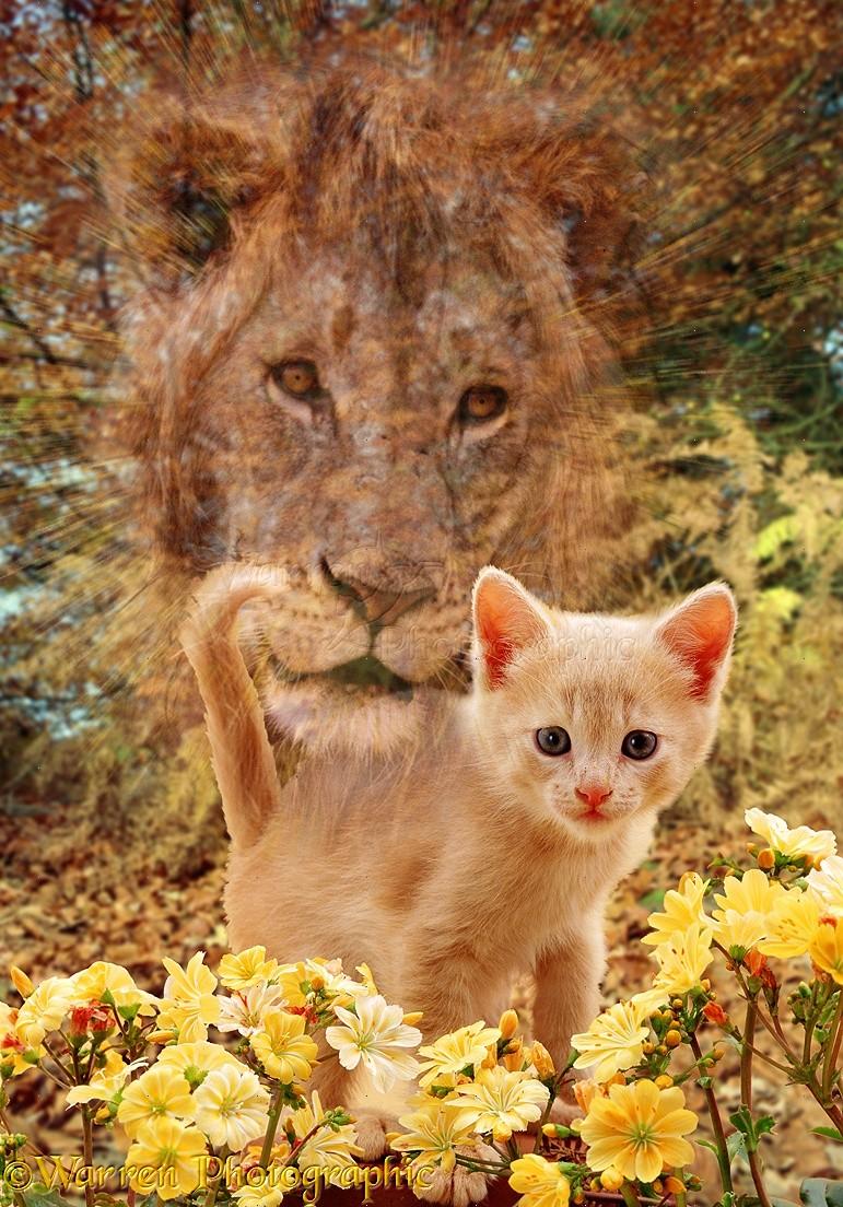 лев кот