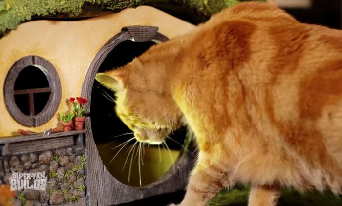 дом для кошек