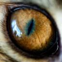 кошачий глаз