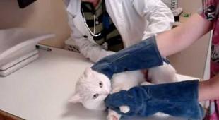 Котик не любит ходить к врачу