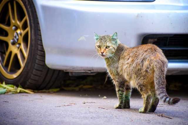 зеленая кошка